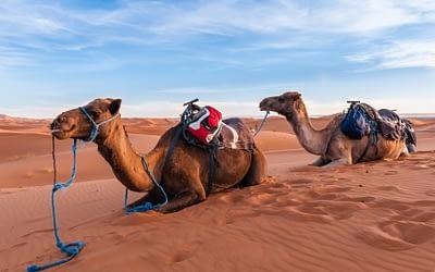 Merzouga desert safari (from/ to Marrakech)