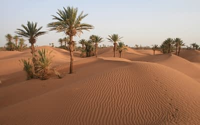 Desert of Chegaga (departure from Tamegroute)
