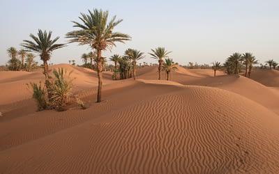 Desert of Chegaga (departure Tamegroute)